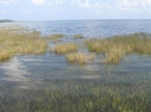 St. Joseph Bay Grass Flats